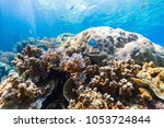 beautiful colorful coral reef...   Shutterstock . vector #1053724844