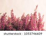 Heather Flowers In Gray...