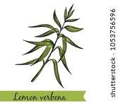 vector illustration   lemon... | Shutterstock .eps vector #1053756596