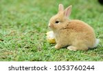 cute rabbit  brown and white...   Shutterstock . vector #1053760244