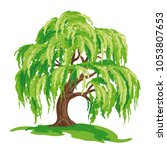 Vector Drawing Of Willow Tree....