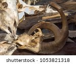 skulls of mountain sheep ... | Shutterstock . vector #1053821318