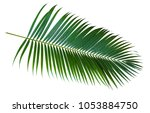 palm leaves isolated on white... | Shutterstock . vector #1053884750