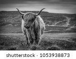 highland cow  scotland | Shutterstock . vector #1053938873