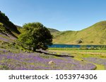 bluebells growing at rannerdale ... | Shutterstock . vector #1053974306