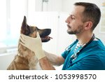 Stock photo vet doctor checking eyes of fluffy patient while holding its muzzle 1053998570