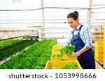 young hothouse worker in... | Shutterstock . vector #1053998666
