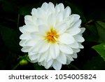 white flower close up | Shutterstock . vector #1054005824