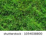 close up of uncultivated wild...   Shutterstock . vector #1054038800