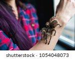 spider tarantula crawls on the... | Shutterstock . vector #1054048073