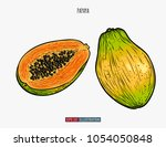 hand drawn papaya isolated.... | Shutterstock .eps vector #1054050848