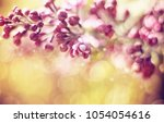 background with lilac flowers... | Shutterstock . vector #1054054616