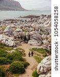 pair of stony point penguins... | Shutterstock . vector #1054058258