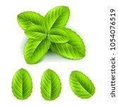 fresh mint leaves 3d photo... | Shutterstock .eps vector #1054076519