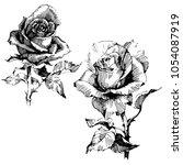 wild flowers roses isolated.... | Shutterstock .eps vector #1054087919