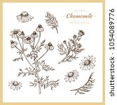 hand drawn botanical... | Shutterstock .eps vector #1054089776
