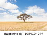solitary acacia tree in african ... | Shutterstock . vector #1054104299