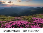 from the lawn covered with...   Shutterstock . vector #1054133954