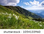 landscape with beautiful...   Shutterstock . vector #1054133960