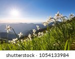 landscape with beautiful...   Shutterstock . vector #1054133984