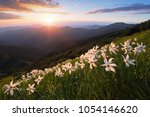 grass with daffodils. the...   Shutterstock . vector #1054146620