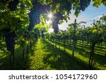 grape harvest italy | Shutterstock . vector #1054172960