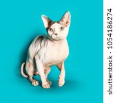cat of the canadian sphynx... | Shutterstock . vector #1054186274