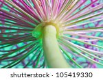 macro picture of the lower side ...   Shutterstock . vector #105419330