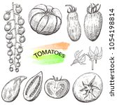 hand drawn tomatoes set... | Shutterstock .eps vector #1054198814
