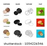 hazelnut  pistachios  walnut ... | Shutterstock .eps vector #1054226546