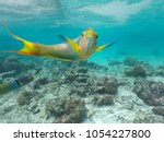 male parrotfish looking at the...   Shutterstock . vector #1054227800