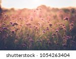 summer purple flowers in garden ... | Shutterstock . vector #1054263404