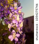 purple flower background for... | Shutterstock . vector #1054275746