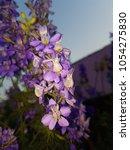 purple flower background for... | Shutterstock . vector #1054275830
