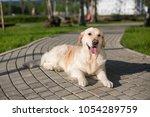 portrait of lovely golden... | Shutterstock . vector #1054289759