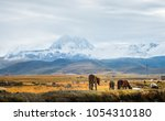 On the vast plateau of China's Tibet, several horses are grazing on the vast yellow grasslands. The snow-capped mountains in the distance are high and towering.