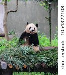 chengdu  sichuan province ... | Shutterstock . vector #1054322108