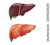 realistic detailed 3d liver... | Shutterstock .eps vector #1054323620