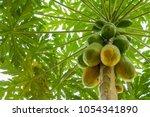 Nature Fresh Yellow Papaya On...