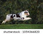 happy australian shepherd dog... | Shutterstock . vector #1054366820