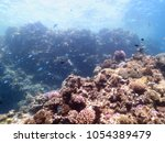 coral lagoon on the great... | Shutterstock . vector #1054389479