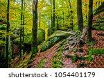 autumn deep forest tree roots... | Shutterstock . vector #1054401179