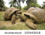 Two Big Seychelles Turtle ...