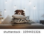 Dog On Pillows In Cozy Interior