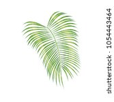tropical palm leaf isolated on... | Shutterstock .eps vector #1054443464