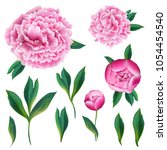 floral elements set with pink...   Shutterstock .eps vector #1054454540