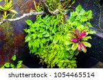 mossy wet wall and tropical... | Shutterstock . vector #1054465514