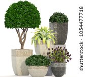 3d illustration of plants on...   Shutterstock . vector #1054477718