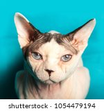 cat of the canadian sphynx... | Shutterstock . vector #1054479194