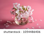 cherry blossoms in a glass | Shutterstock . vector #1054486406